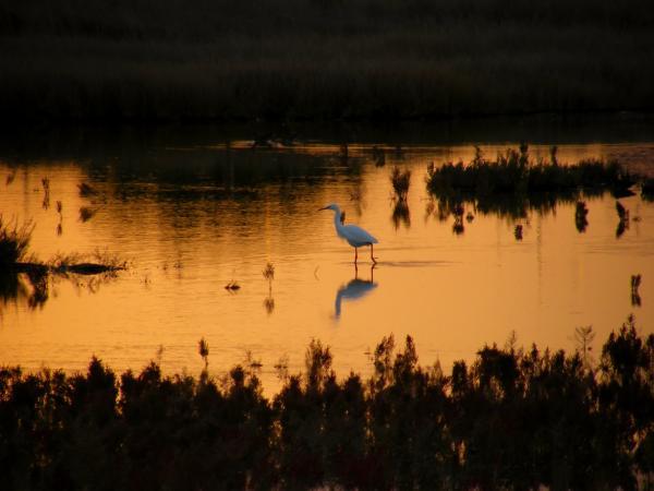 garzetta-al-tramonto.jpg