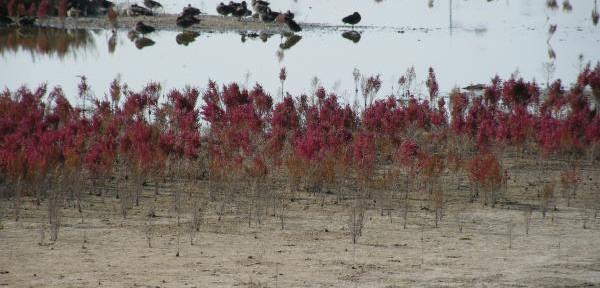 flora-alle-saline.jpg
